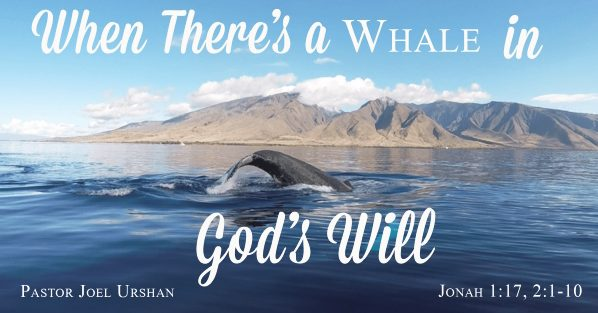 When There's a Whale in God's Will